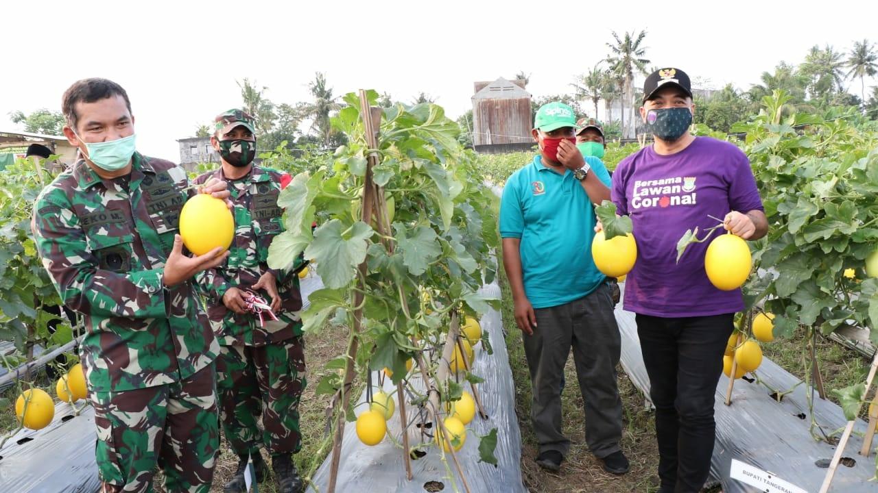 Manfaatkan Lahan Kosong, Pangdam Jaya dan Bupati Zaki Panen Buah Melon