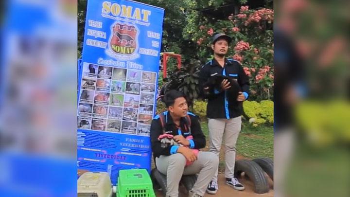 Komunitas Somat, Jadikan Musang Hewan Jinak dan Rumahan